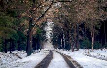 De ce se dă iarna cu sare pe asfalt? Ce beneficii are?