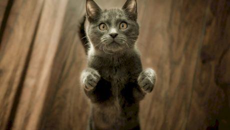 Care sunt cele mai cunoscute animale domestice?
