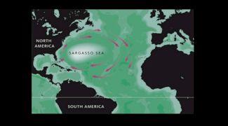 Care este singura mare din lume fără țărm? Unde este situată?