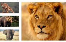100 de curiozități despre animale. Curiozități despre elefanți, delfini sau urși