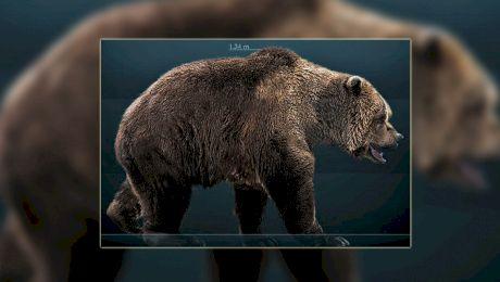 Ce urs înalt cât un autobuz a trăit în România? Cum a dispărut ursul de cavernă?