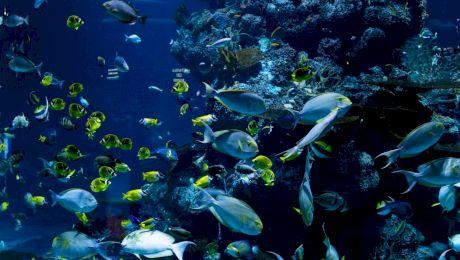 Ce este un ecosistem? De câte feluri este un ecosistem?