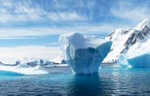 Este adevărat că în Antarctica trăiesc niște creaturi ciudate?