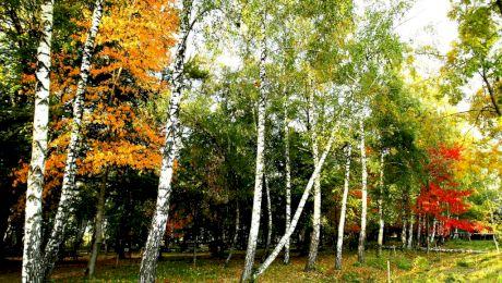 Care este Pădurea de Argint a lui Mihai Eminescu?