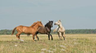 Curiozități despre Pădurea Letea, locul unde caii sălbatici aleargă în liniște