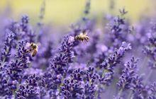 Cum știu albinele că pământul e rotund? Pot albinele calcula unghiuri?