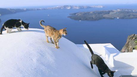 De ce sunt multe pisici în Grecia? Care este explicația?