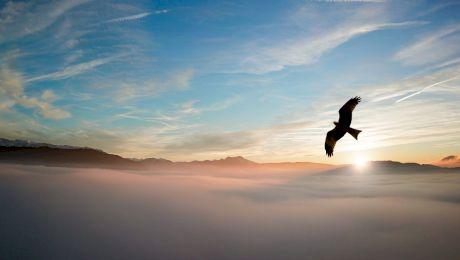 Cum arată traseul unui vultur ce a zburat 20 de ani? Ce a ocolit pasărea an de an?