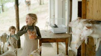Lapte de capră: Beneficii pentru sănătatea noastră