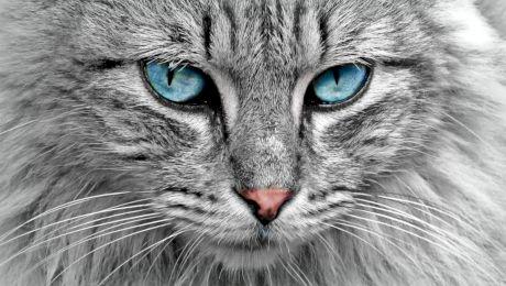 De ce pisicile erau considerate sacre în Egipt?