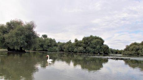 Ce a scris Jacques-Yves Cousteau despre Delta Dunării?