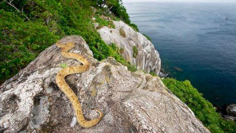 Șerpărie. Care este locul cu cei mai mulți șerpi veninoși din lume?