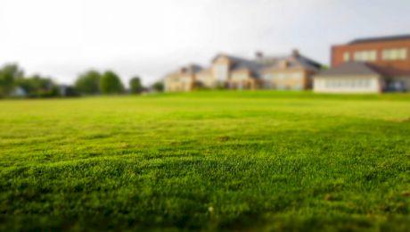 De ce este iarba verde? Ce se întâmplă când vine toamna?