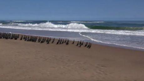 Care este locul unde oceanul întâlnește deșertul?