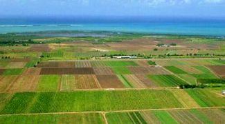 Jumătate dintre terenurile arabile din România sunt deținute de străini