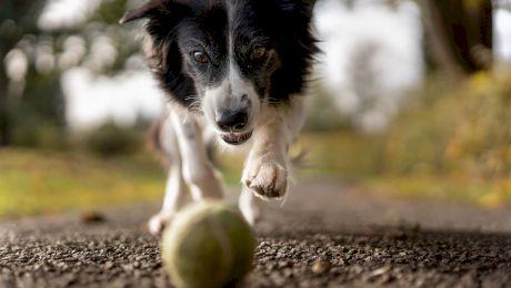 """Curiozitati despre câini. Lucruri pe care nu le știati despre """"cei mai buni prieteni"""" ai oamenilor"""