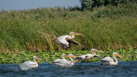 Cinci locuri din Delta Dunării care nu trebuie ratate