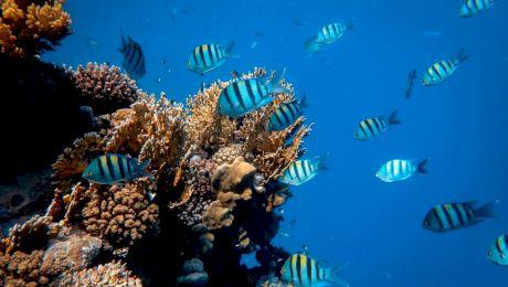 Știai că unii pești își pot schimba sexul? 20 de curiozități despre pești