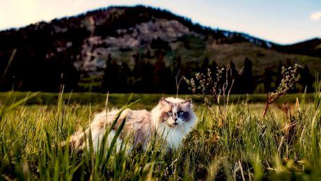 Curiozitati despre pisici. Lucruri pe care nu le știati despre pisicuțe